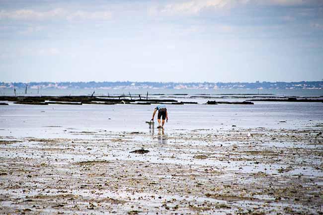 Les palges à marée basse sont le terrain de jeu des pêcheurs à pied