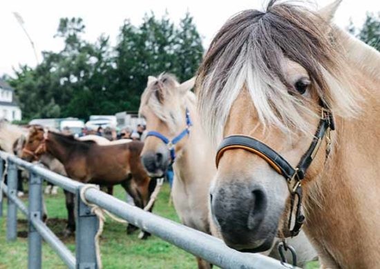 Foire de Lessay au forail pour la vente de chevaux