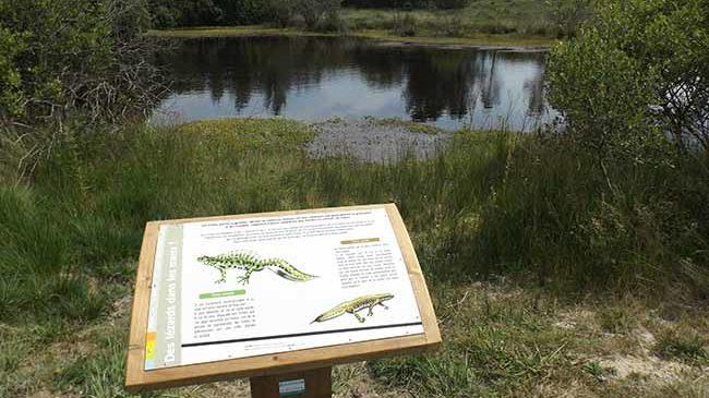 Panneau d'interprétation au lac des Bruyères