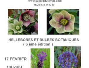 HELLEBORES-ET-BULBES-2
