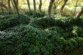 Jardin-Le-Haut-Dy—Cre-ances-2