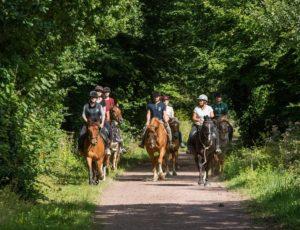 chevaux-cote-ouest-centre-manche-cotentin-2