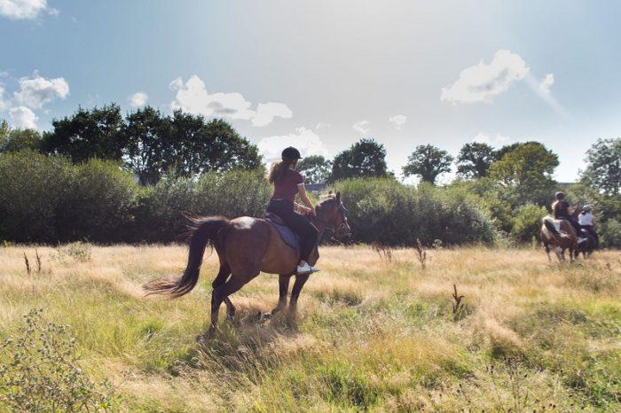 chevaux-cote-ouest-centre-manche-cotentin-3