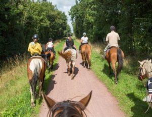 chevaux-cote-ouest-centre-manche-cotentin