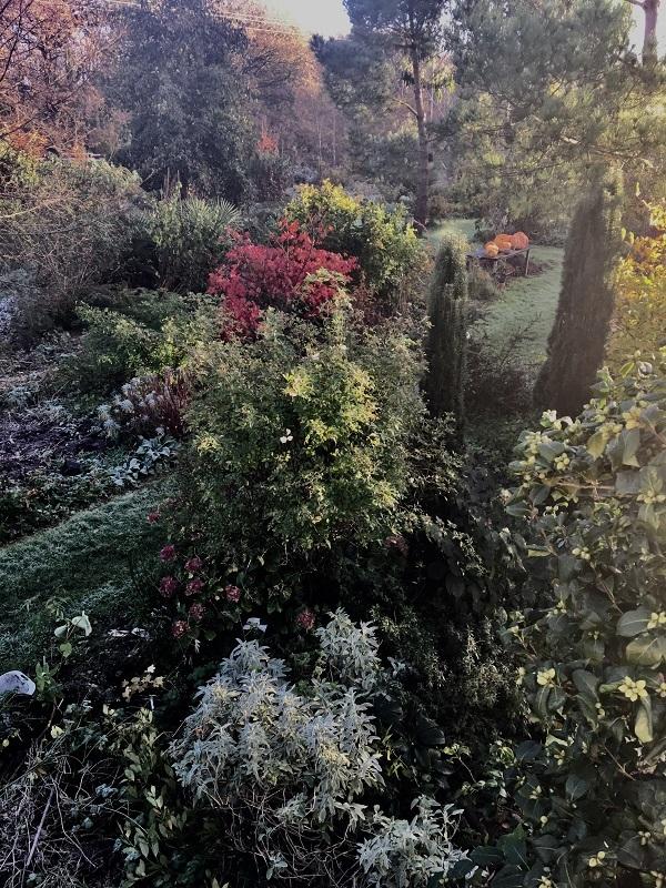jardin-7-chene-lessay
