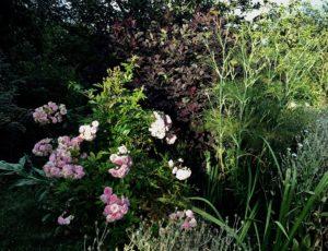 lessay-jardin-les-sept-chenes-1-Caron