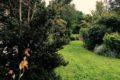 lessay-jardin-les-sept-chenes-3-Caron