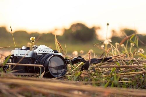 pexels-photo-1113272
