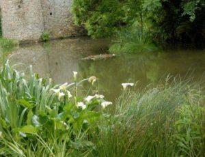saint-sauveur-de-pierrepont-jardin-du-manoir-le-hot-1
